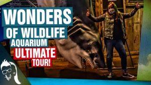 Wonders of Wildlife